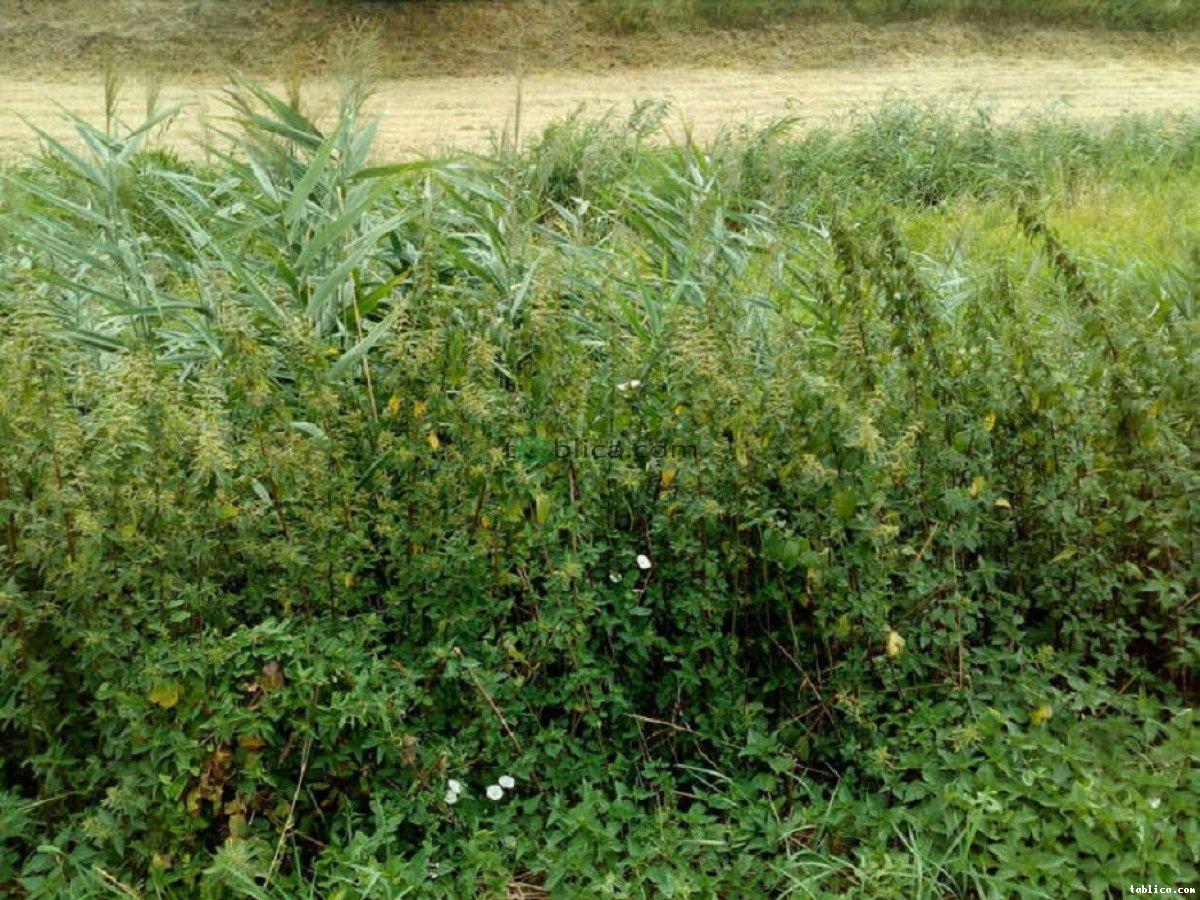 Koszenie trawy zarośniętych działek kosą spalinową