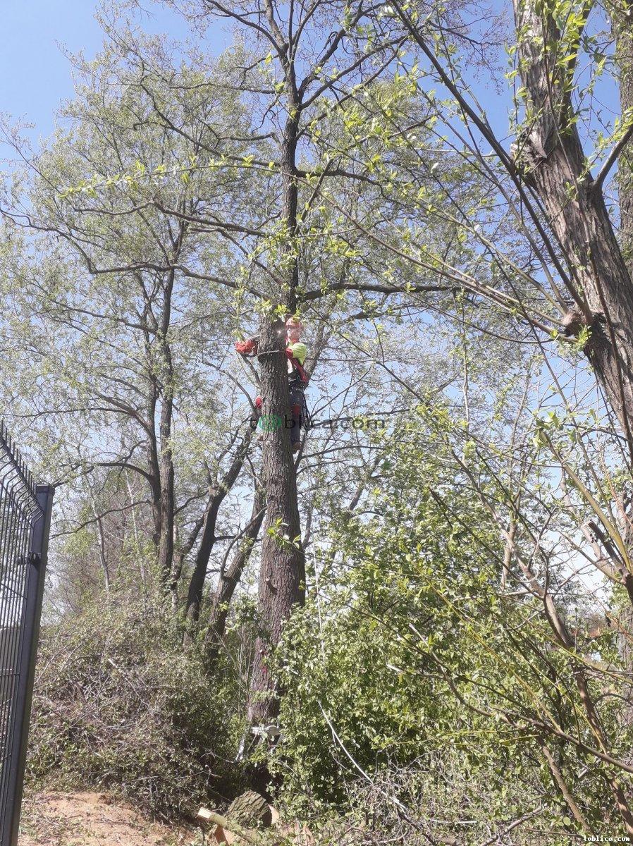 Wycinka drzew/pielęgnacja zieleni/usługi wysokościowe