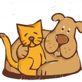 Groomer psów i kotów z dojazdem do domu klienta